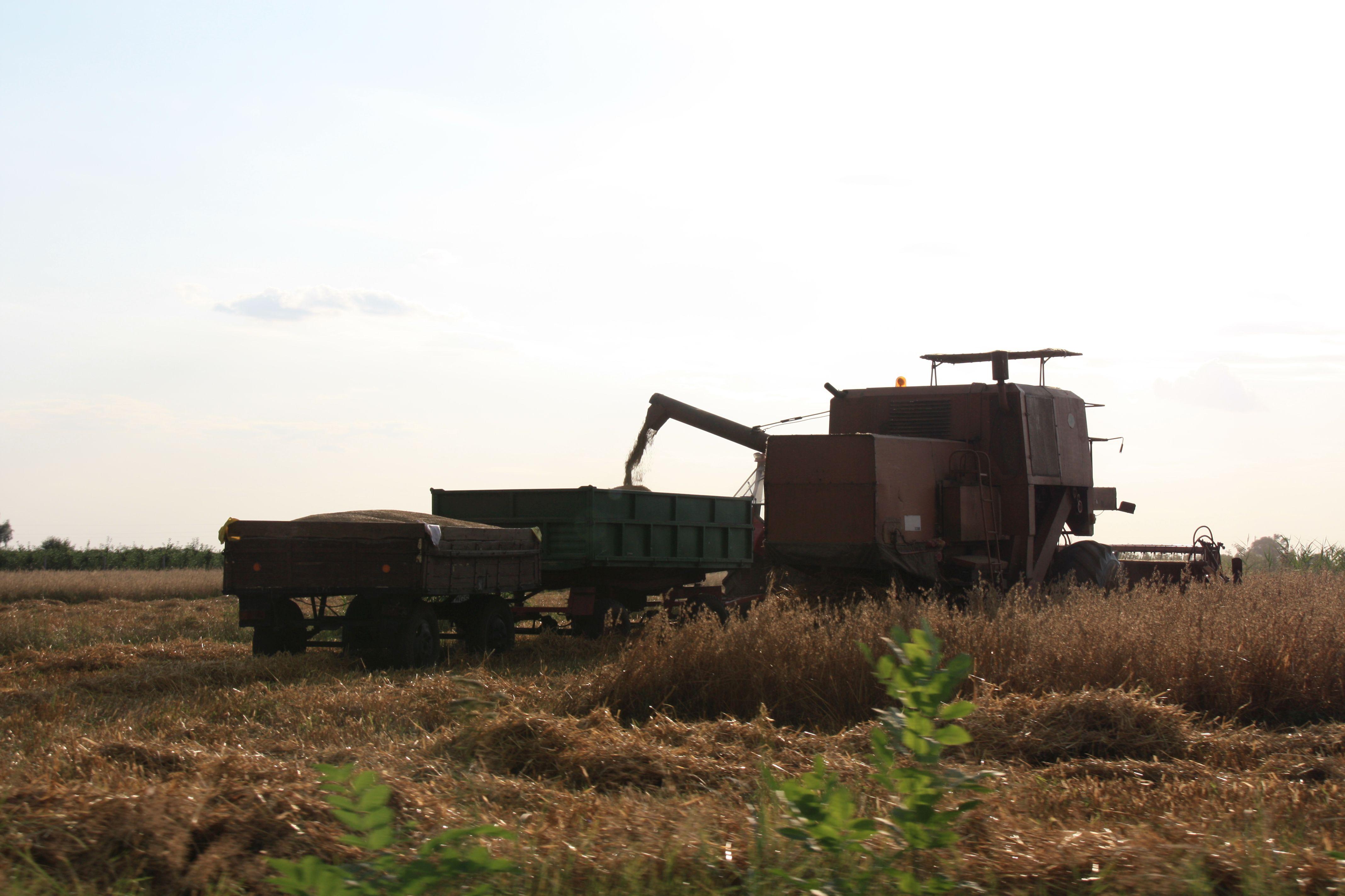 Aktualne Ceny Zboz Lodzki Osrodek Doradztwa Rolniczego W